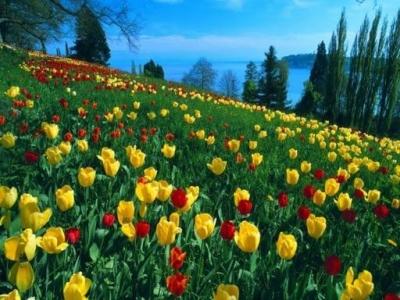 Tranh phong cảnh ốp tường- Tranh vườn hoa 3D